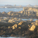 Photo of Asilomar State Beach